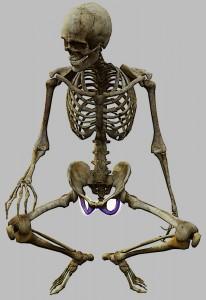 עצמות הישיבה: בתחתית האגן