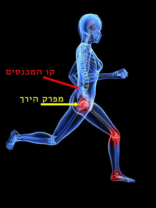 """מניעת כאבי גב תחתון ע""""י שימוש במפרקי הירך"""