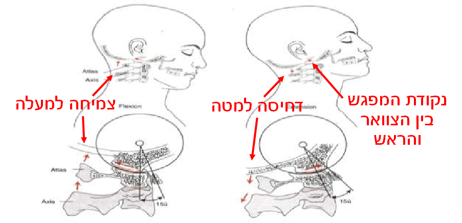 Nodding motions of the atlanto-occipital joints.